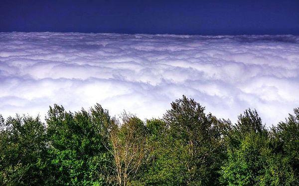 جنگلی که در میان دریای ابرهاست + عکس