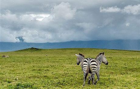 گورخری  2 سر در تانزانیا + عکس