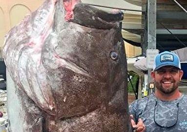 صید ماهی غول پیکر بزرگتر از انسان +عکس