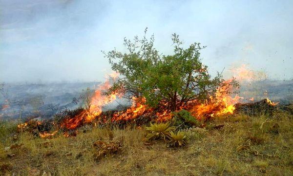 ۱۰ هکتار منابع طبیعی و ۶۰ نخل عنبرآباد در آتش سوخت