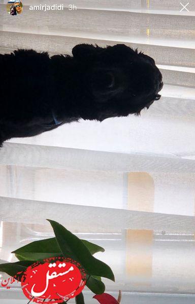 سگ سیاهرنگ امیر جدیدی + عکس