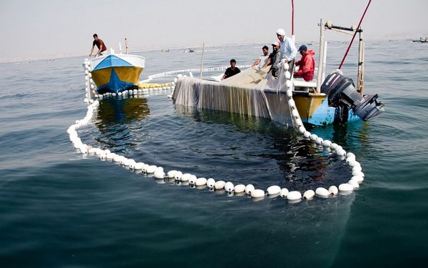 صید شیر ماهی در هرمزگان تا ۲۵مهر ممنوع است