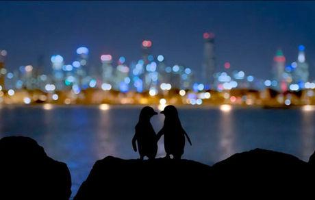 عکسی زیبا از بهشت پنگوئنها