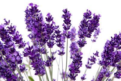 معرفی گیاهان سمی, شیوه نگهداری از گیاهان سمی