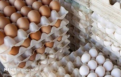 عرضه تخم مرغ فلهای ممنوع شد + جزئیات
