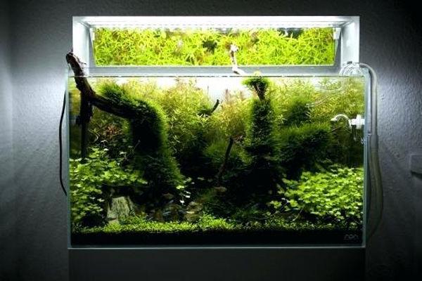کاشت گیاهان برای تزئین داخل آکواریوم