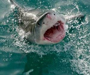 نجات نفس گیر مردی از میان دندان های کوسه