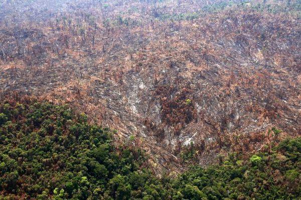 تصویری از نتیجه آتش سوزی در جنگلهای آمازون