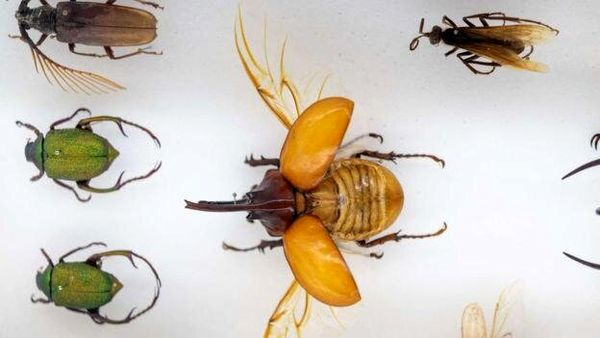 افشاگری مگس ها و زندگی بدون سر سوسکها