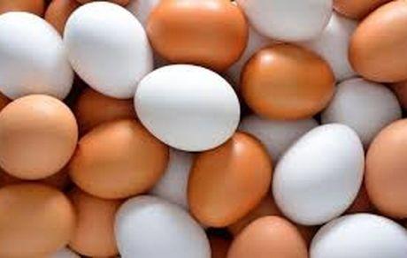 قیمت هر شانه تخم مرغ به ۴۰ هزار تومان رسید + جزئیات