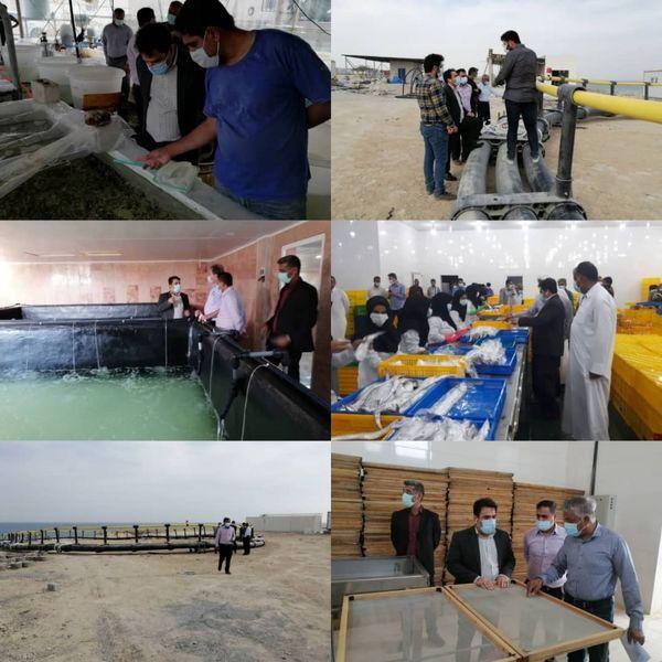 بهره برداری از اولین مزرعه دانش بیان پرورش ماهی در قشم تا قبل از پایان سال