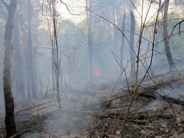 جنگل های رامسر آتش گرفت + علت و جزئیات