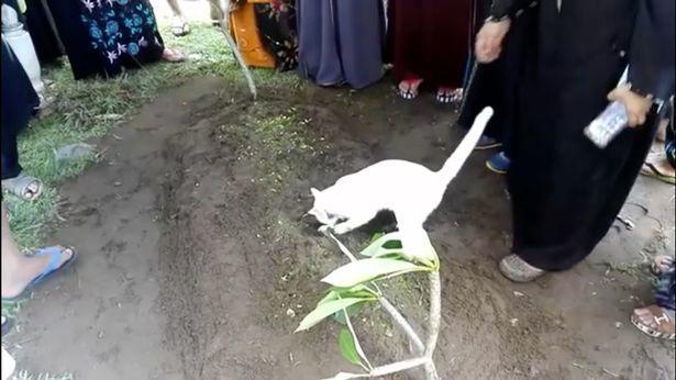 گربه ای که صاحب خود را تا خانه قبر بدرقه کرد+ تصاویر