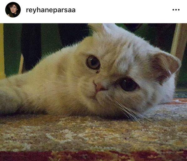 گربه ریحانه پارسا + عکس