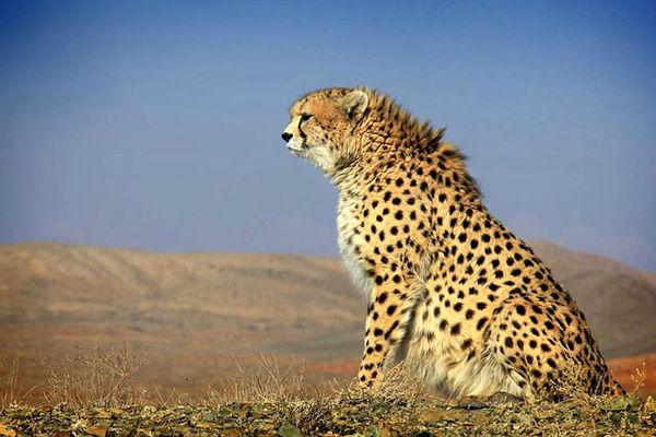 از حیات وحش ایران چه میدانیم؟