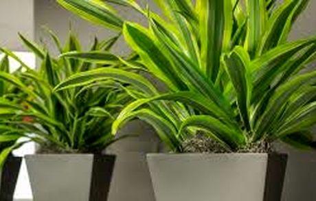 جیغ کشیدن گیاهان هنگام استرس