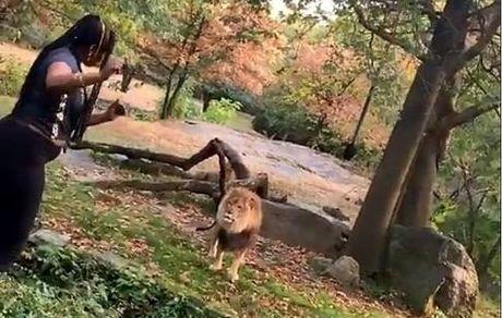 کار عجیب یک توریست هنگام ورود به باغ وحش