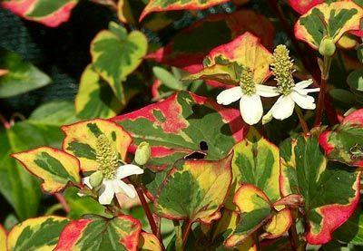 قوانین اجتناب از گیاهان سمی, آسیب های ناشی از گیاهان سمی