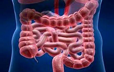 بهترین روش درمان عفونت روده چیست؟