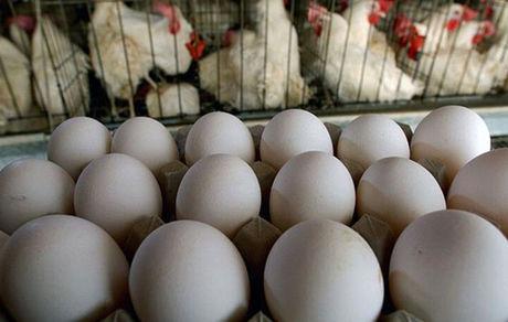 قیمت تخم مرغ چهارشنبه 3 دی اعلام شد